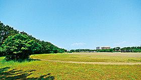 湘南海岸公園の散策道、涼しい林内で一休みできる場所があります