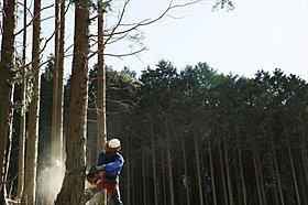材木を原木から直接仕入れ、国産材の安定供給を実現