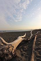 物件から徒歩9分で湘南の海岸へ。