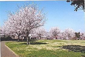 誉田駅から徒歩5分の桜並木がとても有名な誉田さくら公園です