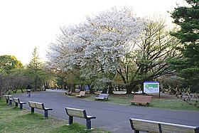 東京ドーム4個分の和光樹林公園。ランニングコースも整ってます