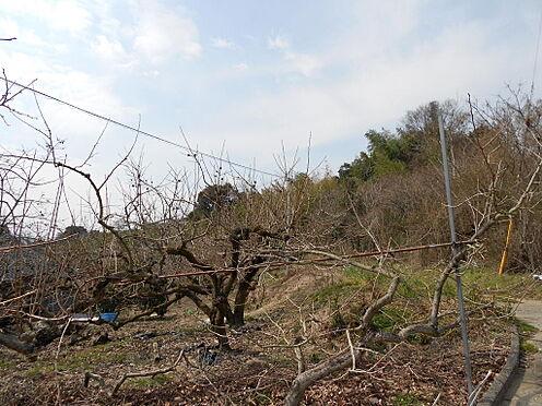 建物全部その他-紀の川市平野 別途付いてる畑、1046平米(316坪)