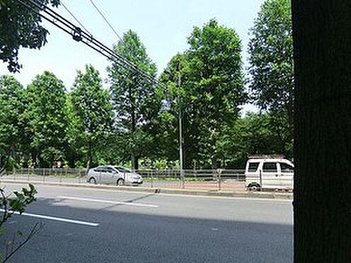 マンション(建物一部)-千代田区平河町2丁目 周辺環境:千鳥ヶ淵公園