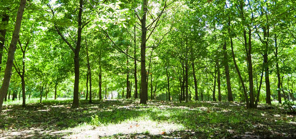 西東京いこいの森公園 約330m(徒歩5分)(平成28年10月撮影)