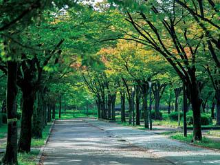 毛馬桜之宮公園 約830m(徒歩11分)