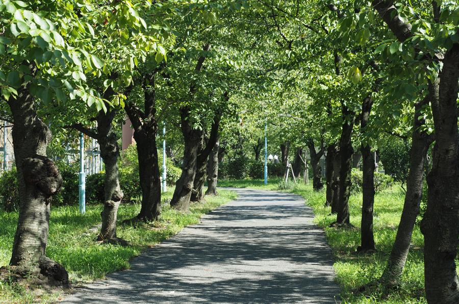 毛馬桜之宮公園 約250m(徒歩4分)