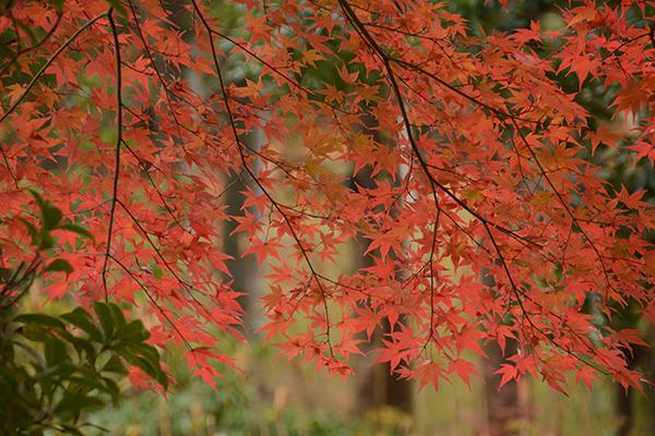 千葉県立柏の葉公園 約2.5km(車4分)(平成26年11月撮影)
