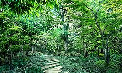 「パークコート千代田四番町」のランドスケープにおいて大切にしたのは、庭園と建築を一体のものと考えること。番町の記憶を受け継ぐ大樹が、住む方の力となる「シーズンズフォレスト」。