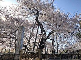 石戸蒲桜まで約4,600m (徒歩58分)