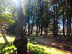 多摩平第1公園まで160m 自然豊かな環境を有する多摩平の中核公園です。敷地内にはテニスコート、少年野球場、お子様向けの遊具がございます。