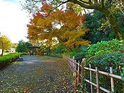 美術館をぐるりと囲む広々とした公園です。池や草はらもあり、非常に自然豊かです。お散歩をしながら、ゆったりとした時間を楽しむことができます。
