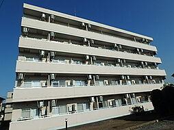 埼玉県さいたま市見沼区島町の賃貸マンションの外観