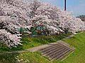 【公園】草花公...