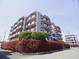東京都小平市栄町3丁目の賃貸マンションの外観