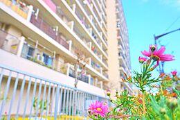 マンション周辺には四季を彩る様々なお花が植えられており、外を通るたびに住民の目を楽しませてくます。四季がある日本だからこそ感じる華やかさ。快適な住環境を是非ご覧下さい