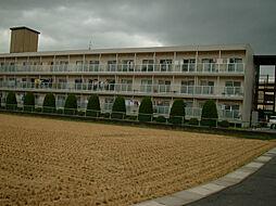 滋賀県野洲市小篠原の賃貸マンションの外観