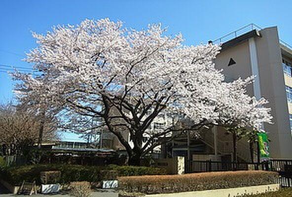 周辺(小学校八王子市立東浅川小学校まで377m)