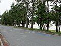 水泳場側道路