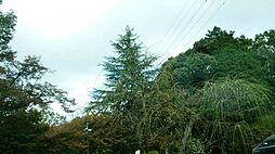 第2号天神山緑地約184m