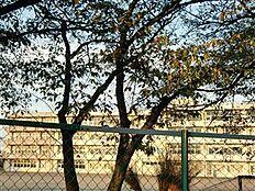 土浦市立土浦第三中学校(1883m)
