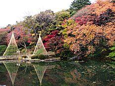 公園江戸川公園:一番広い広場の右手の斜面にしつらえており、鋼管の手摺りと枠に松板の踏板を組み合わせ、斜面の樹木をいためないように浮かして造ってあるのが特徴です。 空中遊歩道は、深い樹間を右へ左へと