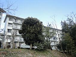 麻生台団地37号棟[5階]の外観