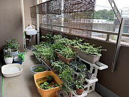 日当たり良好なバルコニーなので家庭菜園もできますね